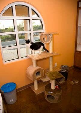 cat-boarding-1