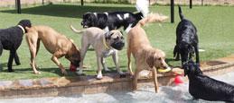 dog-daycare-home
