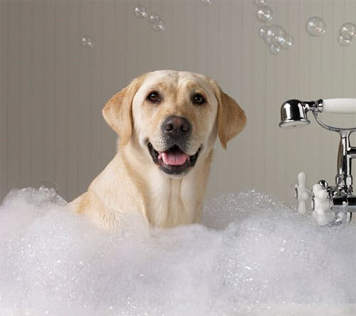 dog-grooming-1