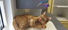 home-cat2