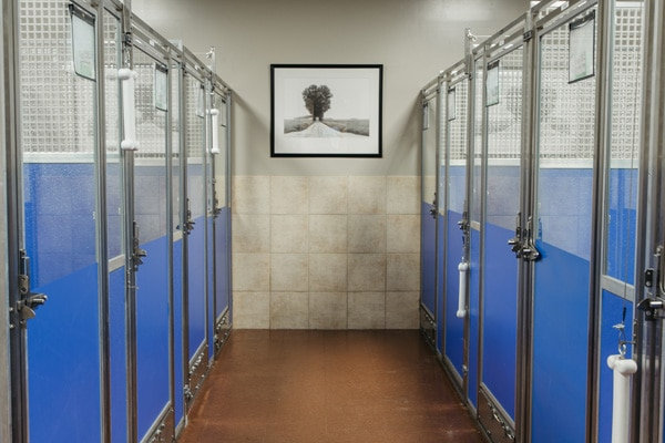 dog-boarding-facility