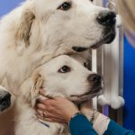 Pyrs in a kennel