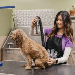 Groomer working with a dog