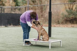 Trainer working with a dog