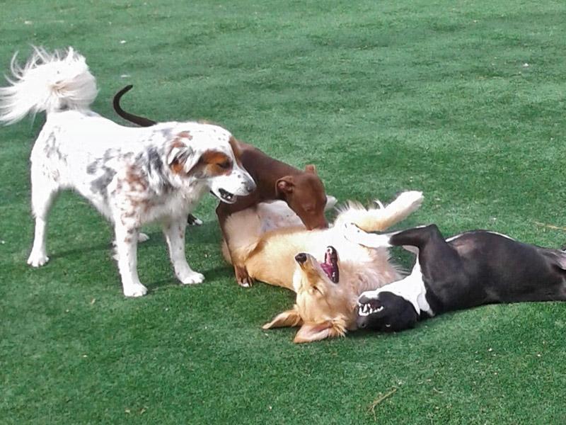dog-boarding-pets