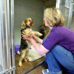 Employee holding a dog