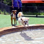 Two dogs playing in the pool