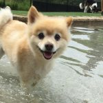 Daycare small dog in pool