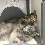 kittens boarding