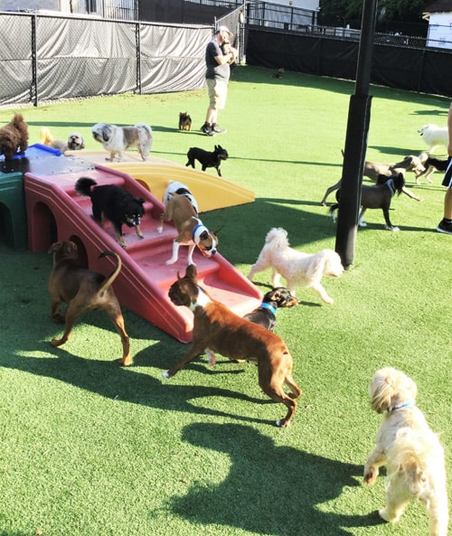 dog daycare playtime