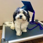 dog training graduation