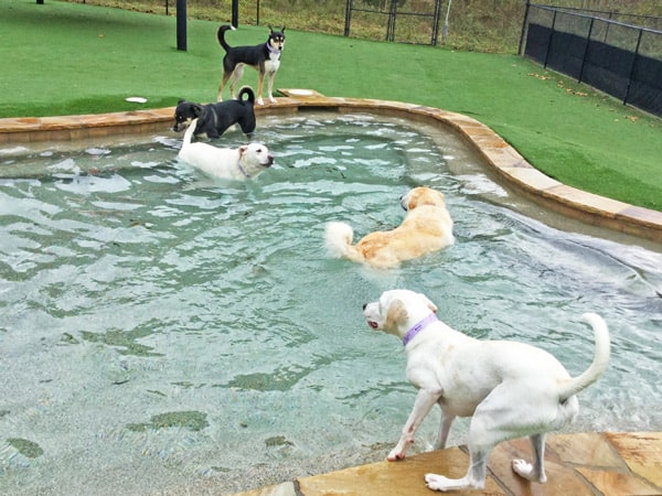 dog boarding at pampered pets inn