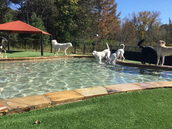 dog daycare pool