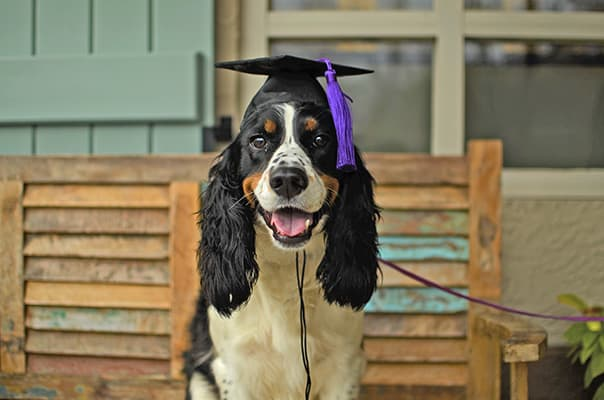 dog-training-dog-in-mortar-board-crop