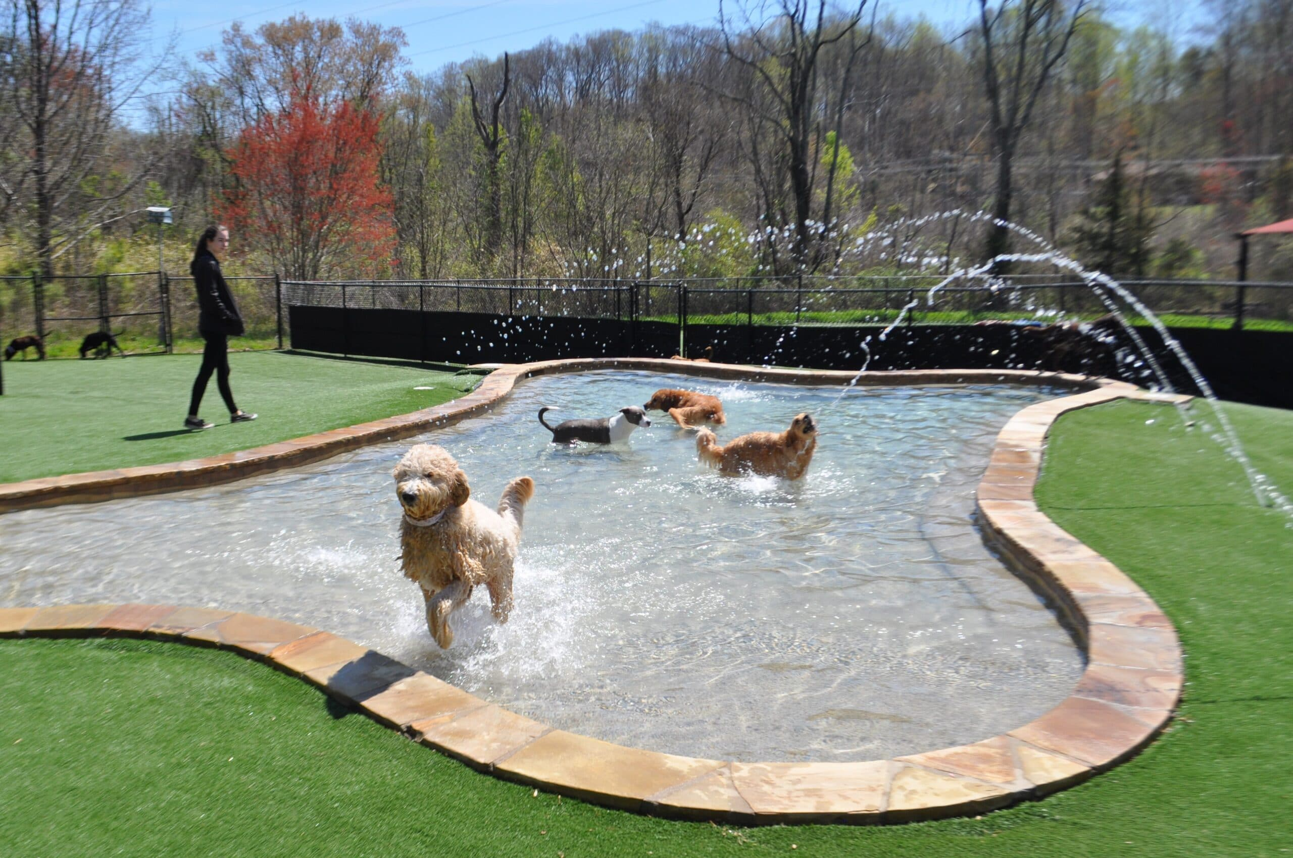 Luxury Dog Boarding in Mooresville NC | Pampered Pets Inn