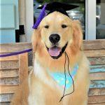 Wilson Grad Hat