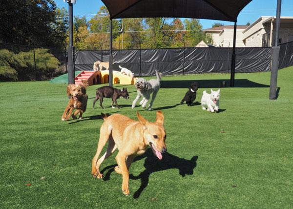Dogs running in yard
