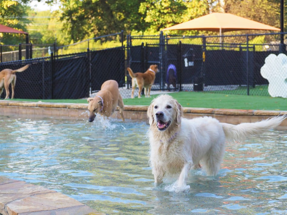 Fun And Safe Dog Daycare In Mooresville Nc Pampered Pets Inn