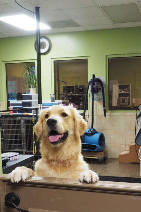 Dog Bathing Services In Mooresville Nc Pampered Pet S Inn