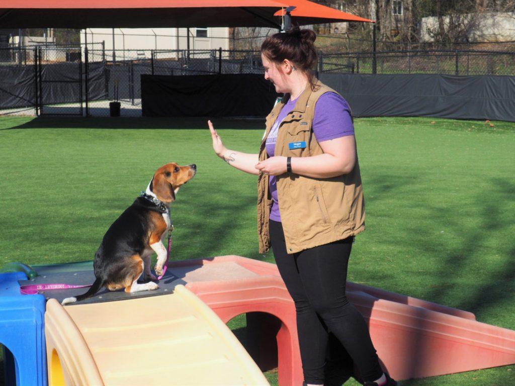 Outdoor dog training