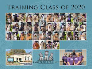 Dog Training Graduates poster