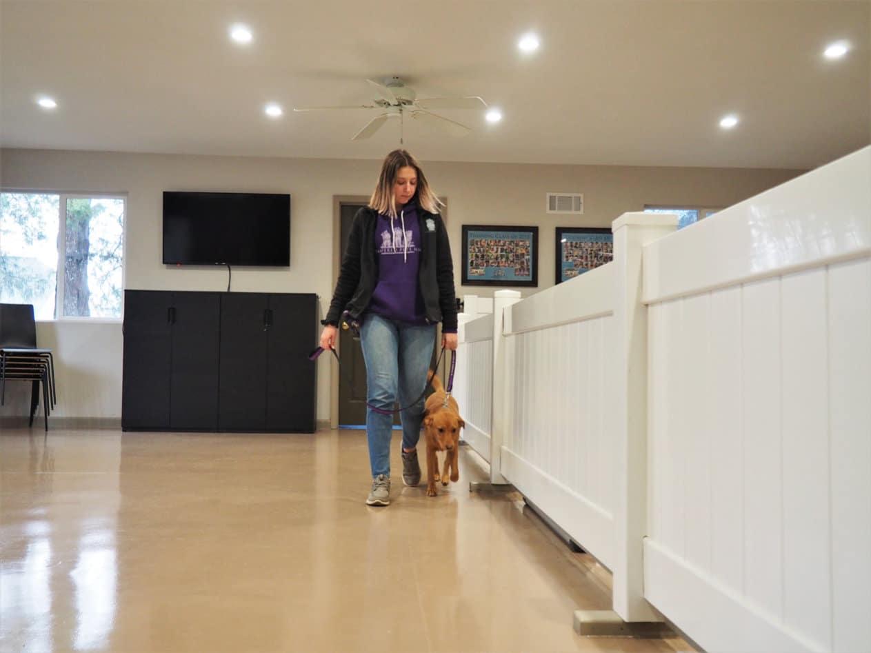 Dog trainer walking a dog