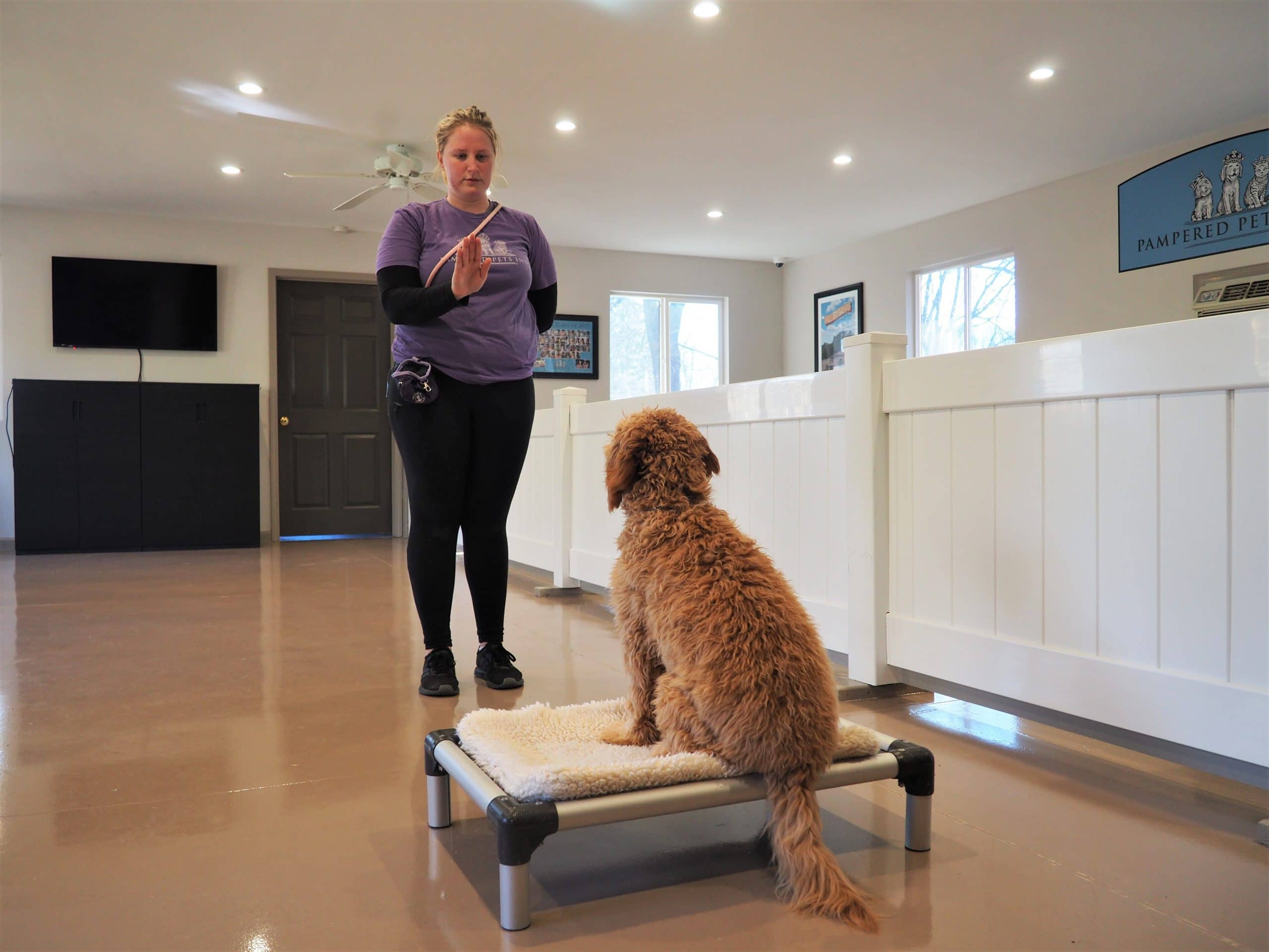 Dog trainer teaching a dog to stay