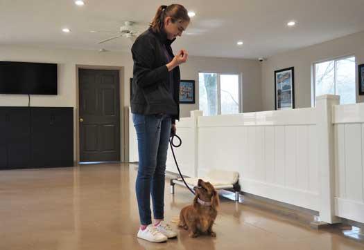 Dog trainer teaching a dog