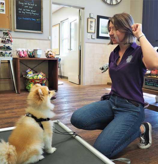 Training a small dog